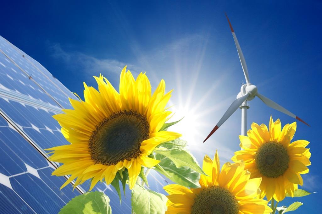 Soonenblumen vor Solaranlage
